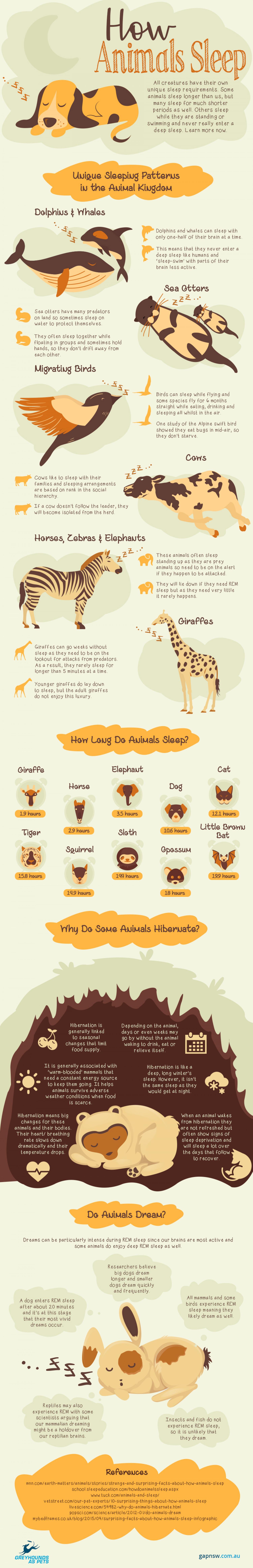 animal sleeping