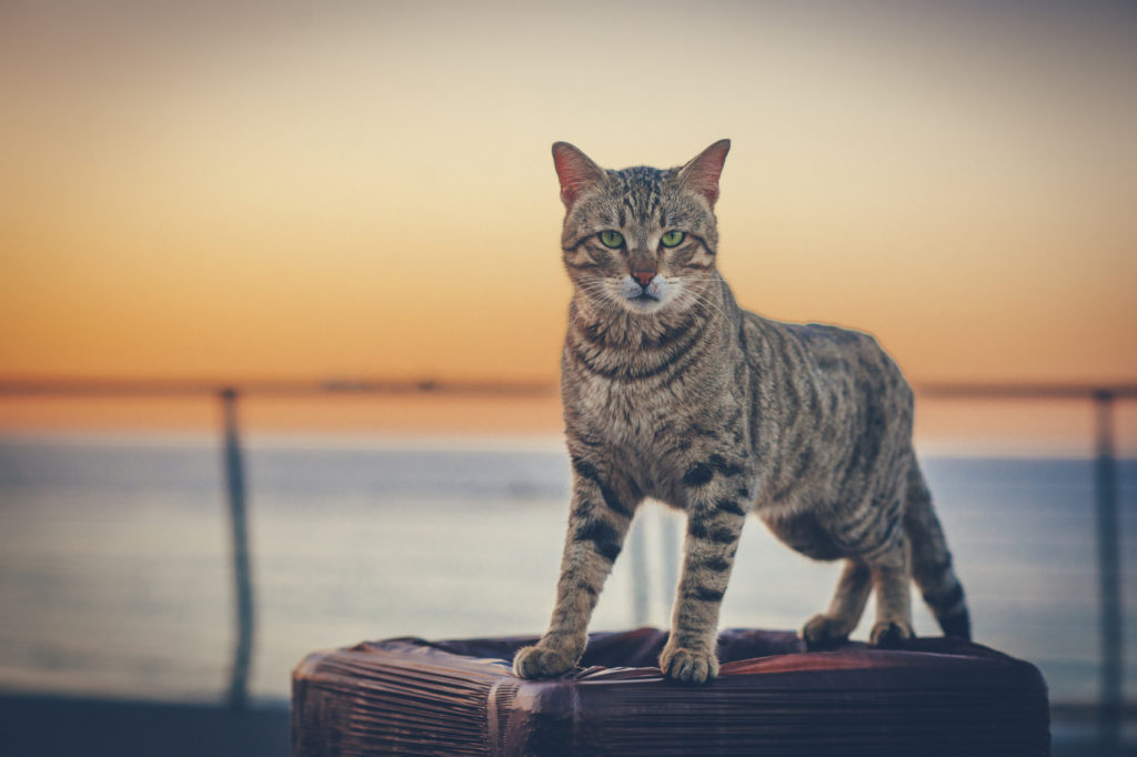 Cute cat outdoors against sunset