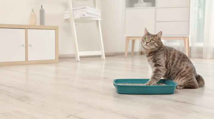 Cute grey cat puts one paw in his green litter box in a clean white bathroom