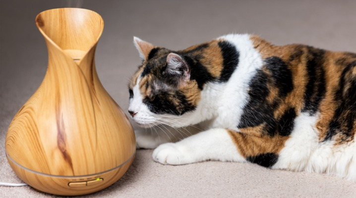 calico-cat-sniffing-smelling-wooden-bamboo-essential-oil-diffuser-picture-id1013466514