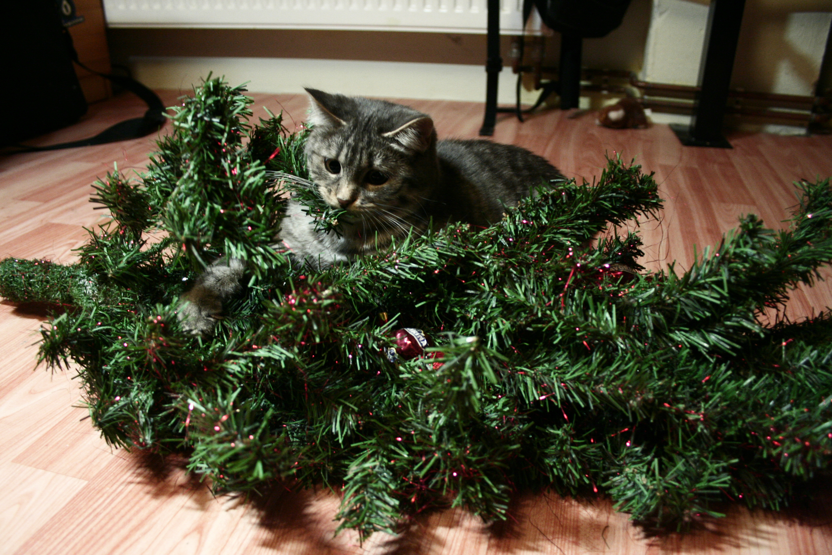 cat-biting-christmas-tree