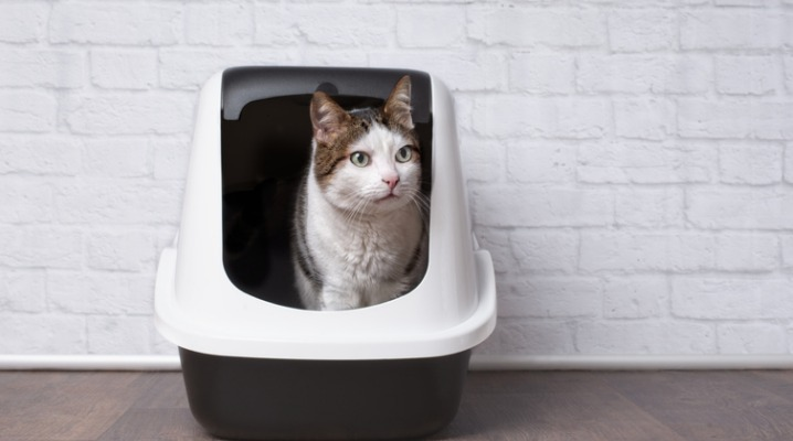 cute-tabby-cat-sitting-in-a-litter-box-and-looking-sideways-picture-id1087290866