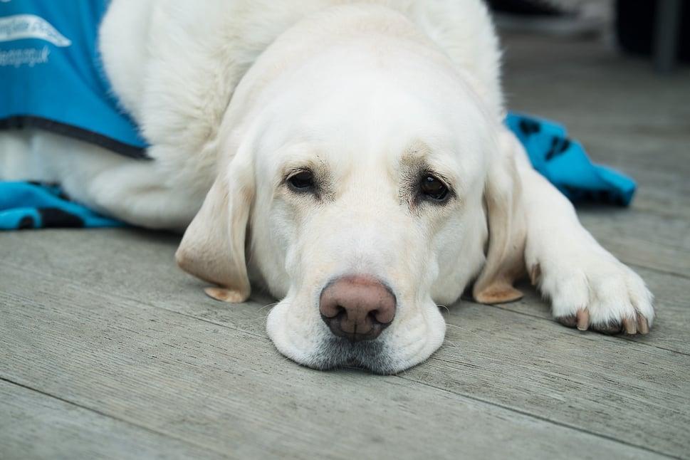 dog-3175810_1280