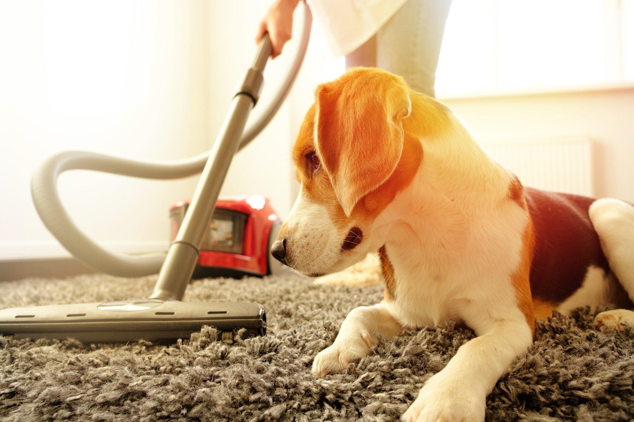 dog-and-vacuum