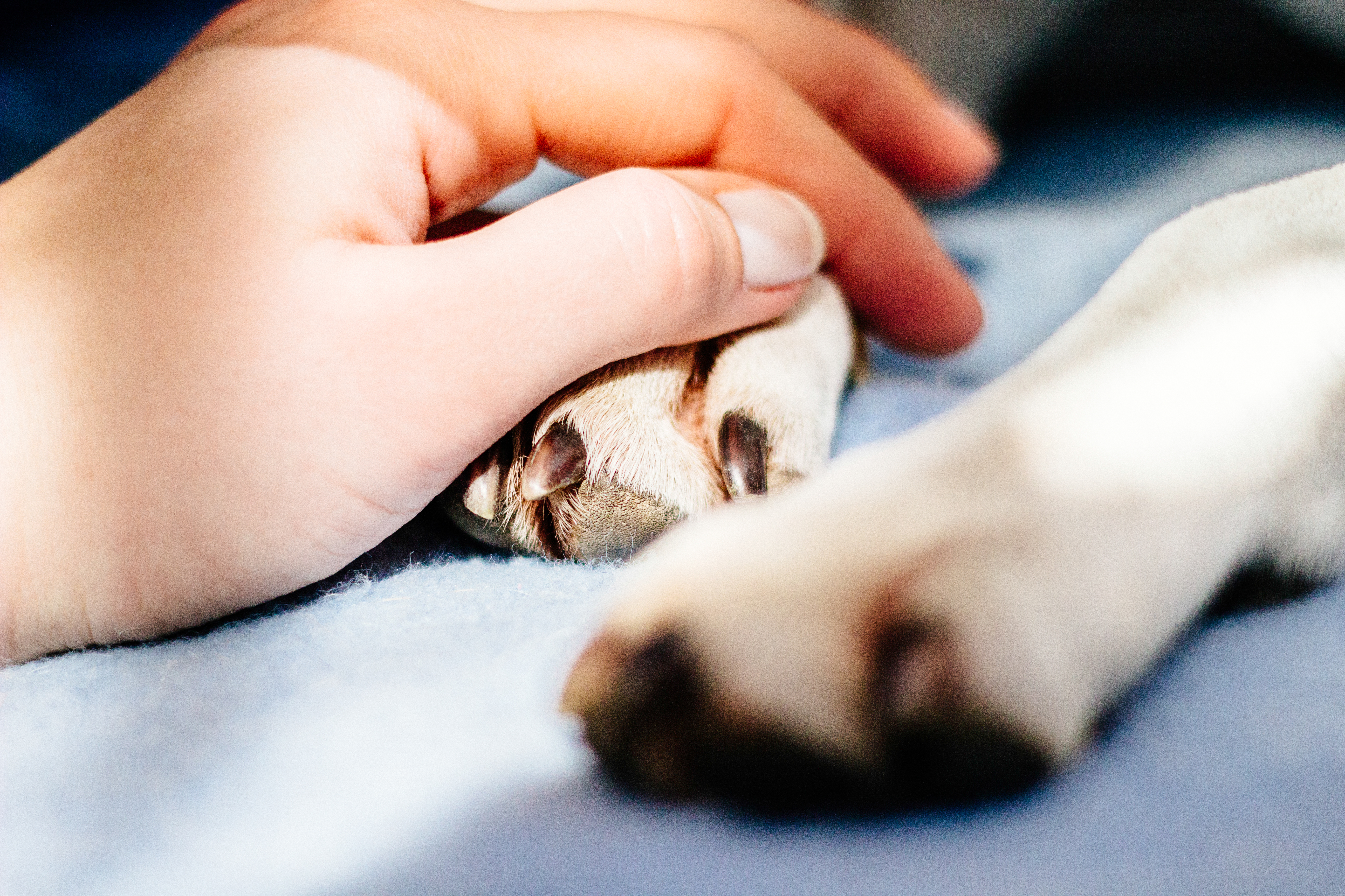 Close up of a pet owner holding her dog's paw