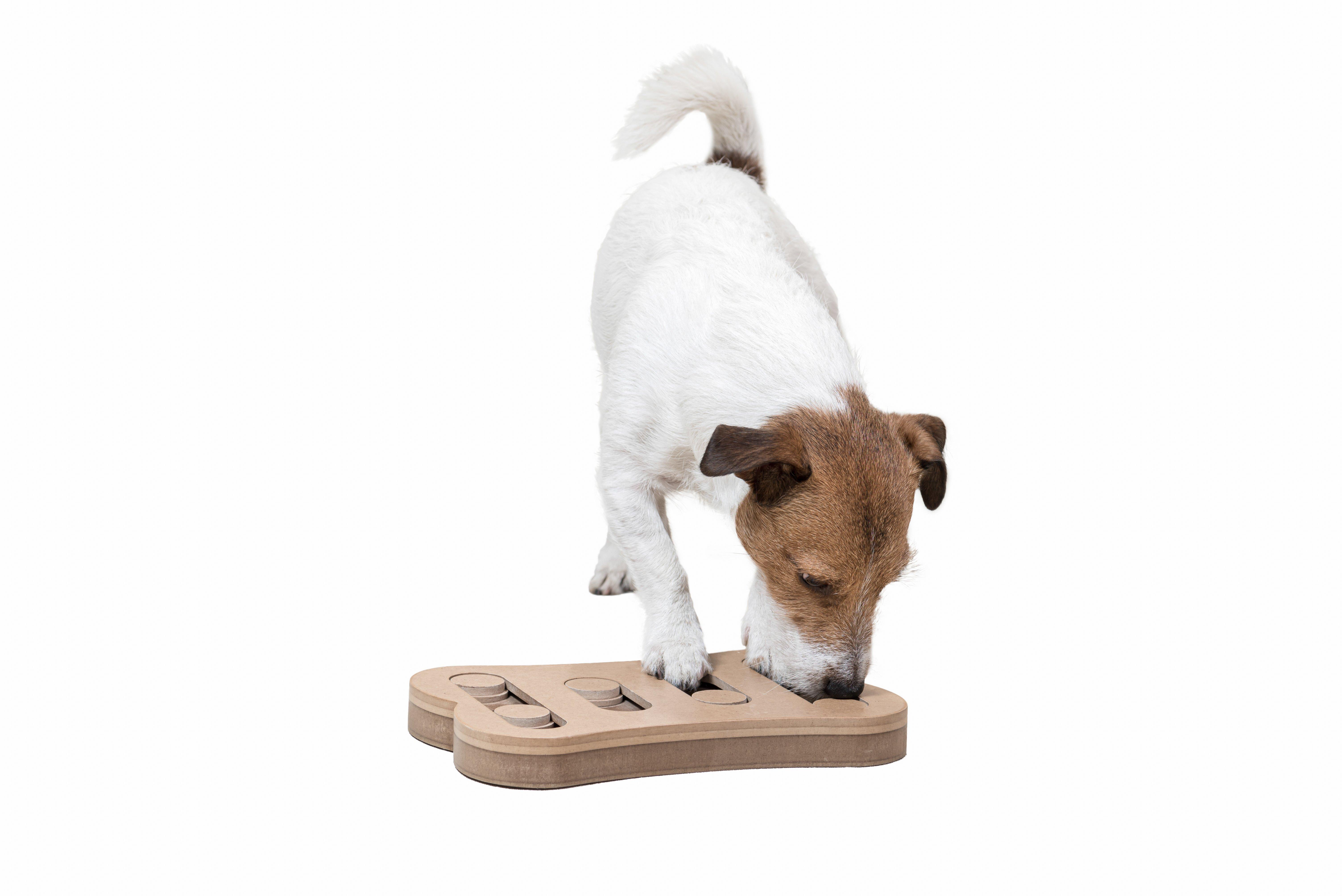 dog-doing-puzzle