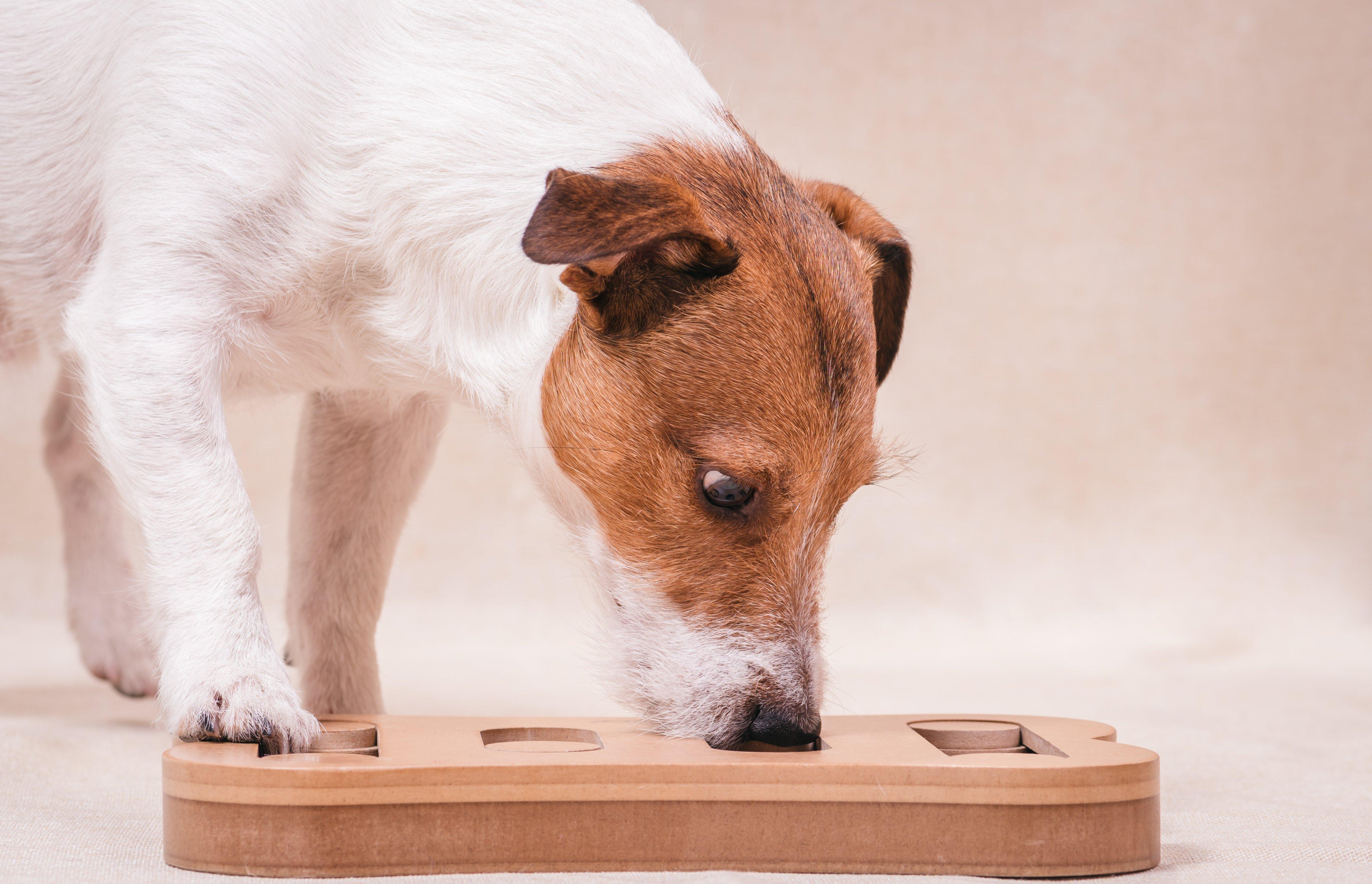 dog-puzzle