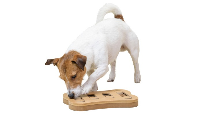 dog-sniffing-training-with-smart-toy-isolated-on-white-background-picture-id874857158