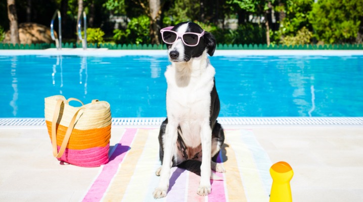 funny-dog-on-summer-vacation-at-swimming-pool-picture-id497998427