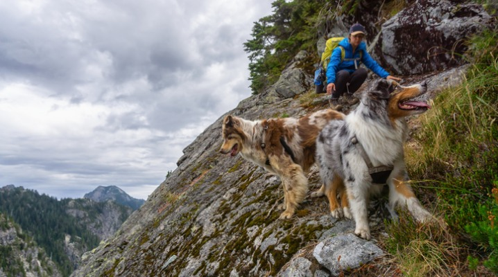 A woman hiking behind her border collies on a grey cloudy day