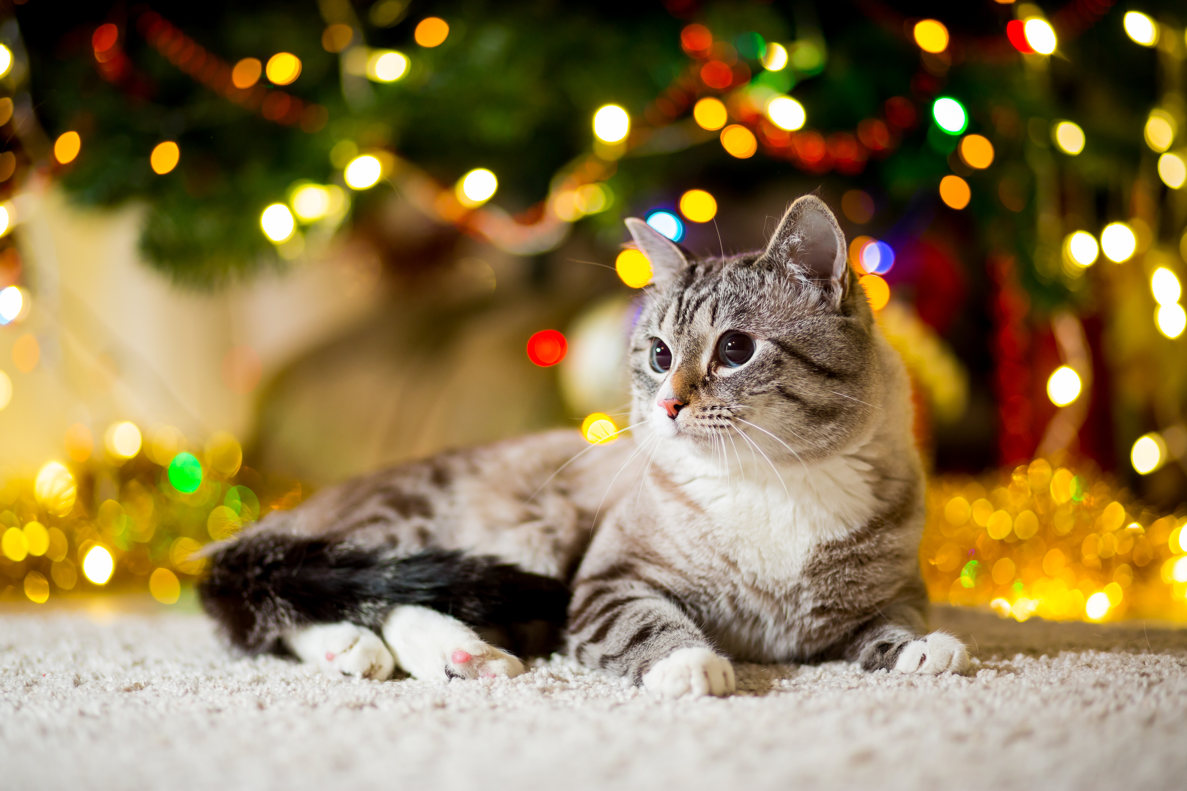 A cute grey tabby cat sits under a Christmas tree