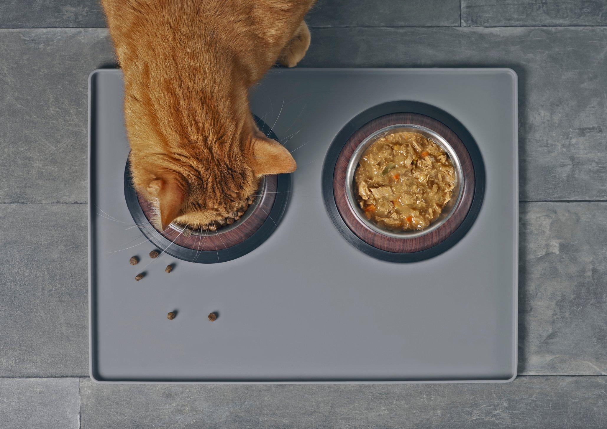 Orange cat eats kibble out of a double dish