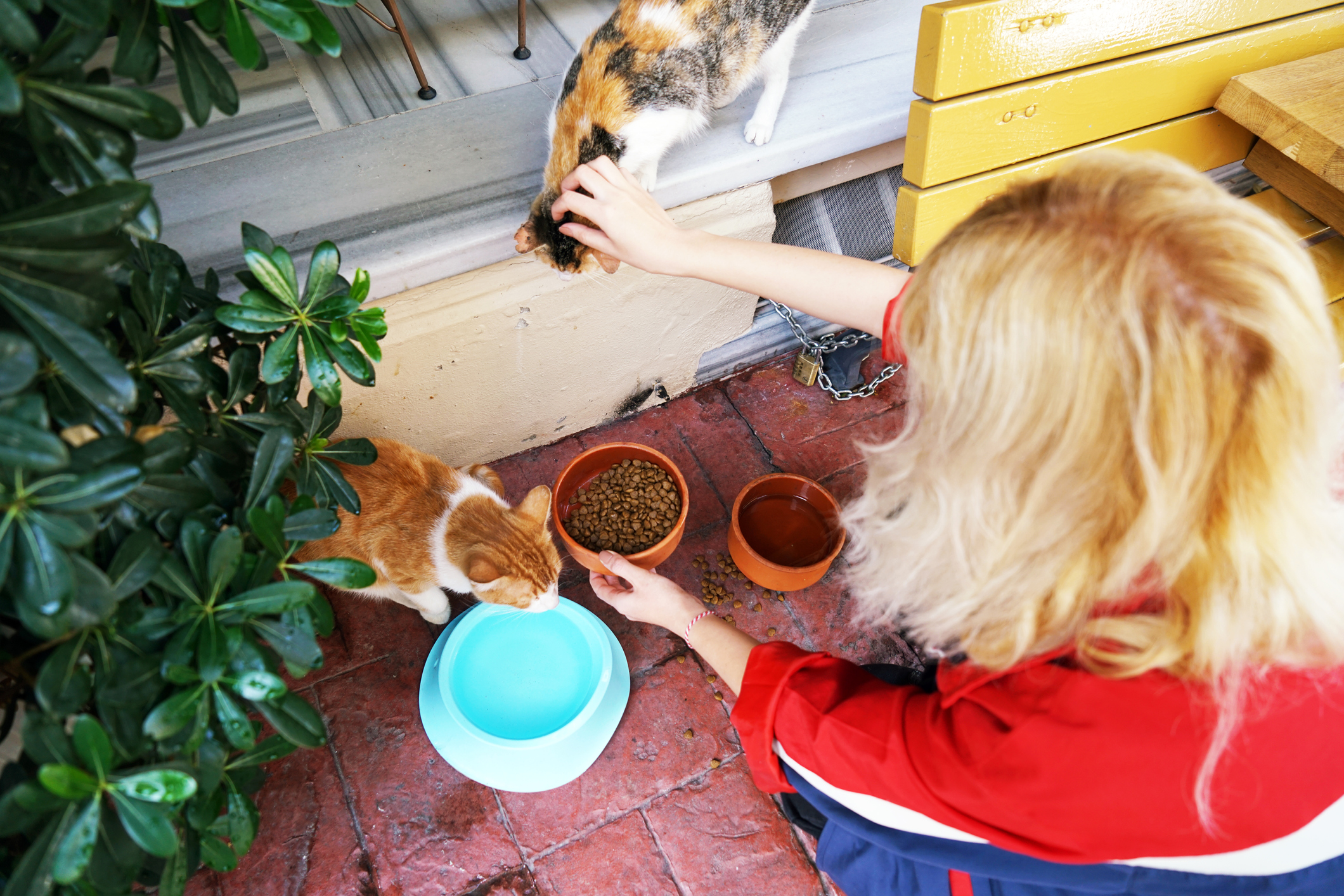 Blonde woman feeds two stray cats