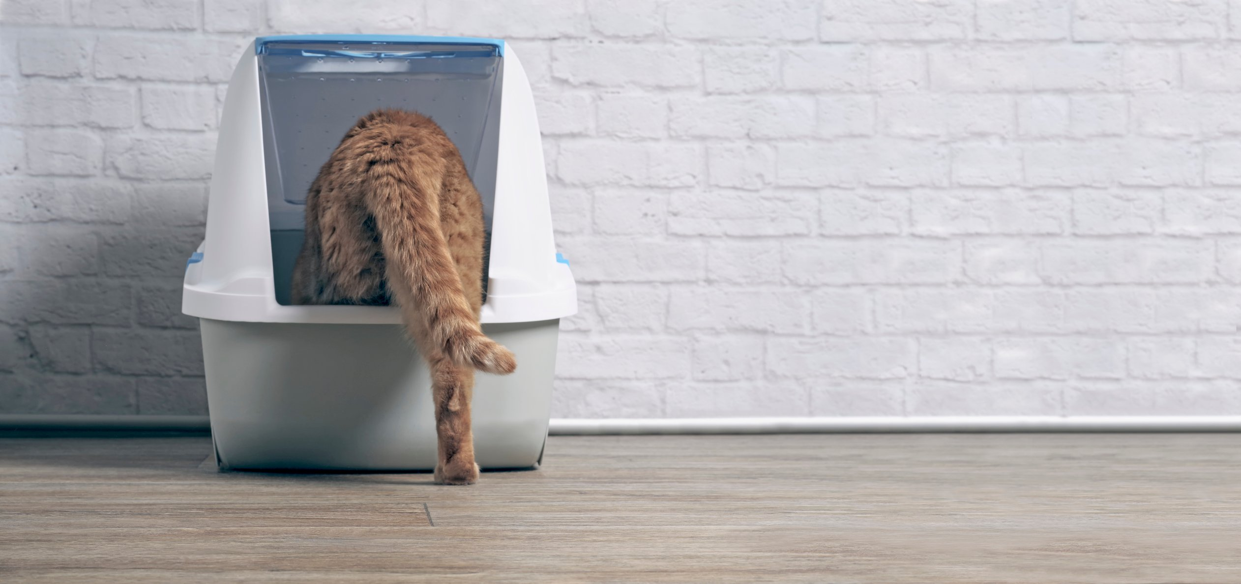 Orange cat uses a covered litter box