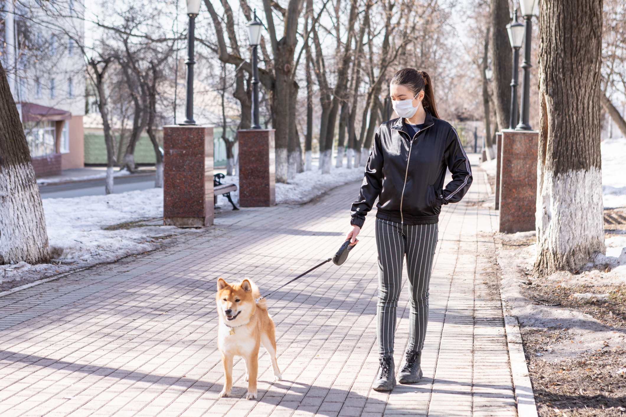 Stylish young woman in a medical mask walks her Shiba inu in the winter