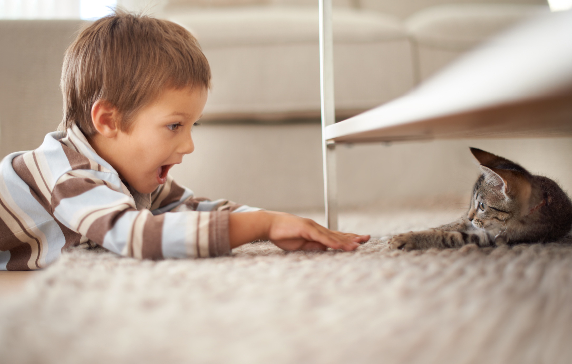 Young boy plays with a kitten under the table