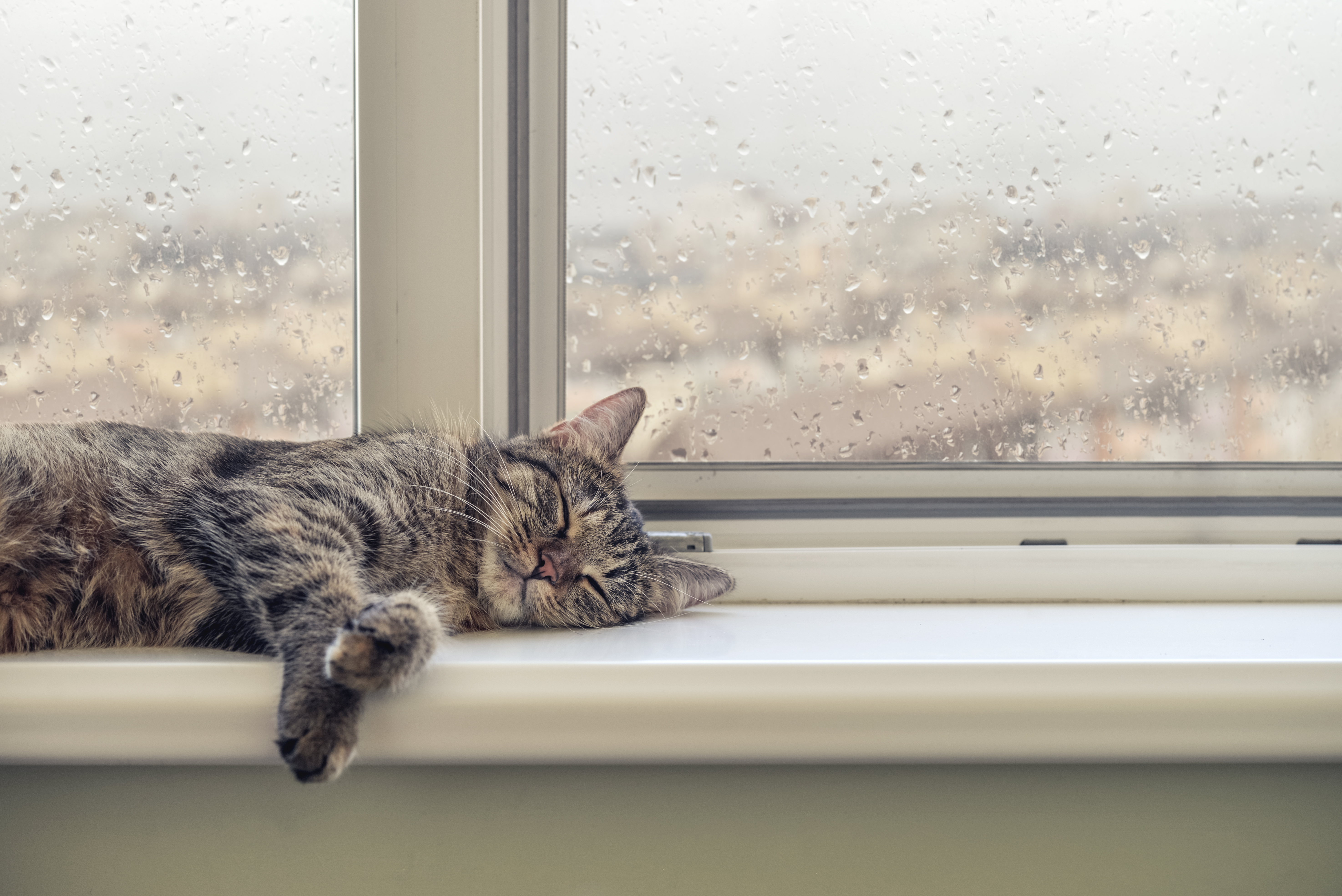 A cute cat sleeps on the window sill during a rainy day