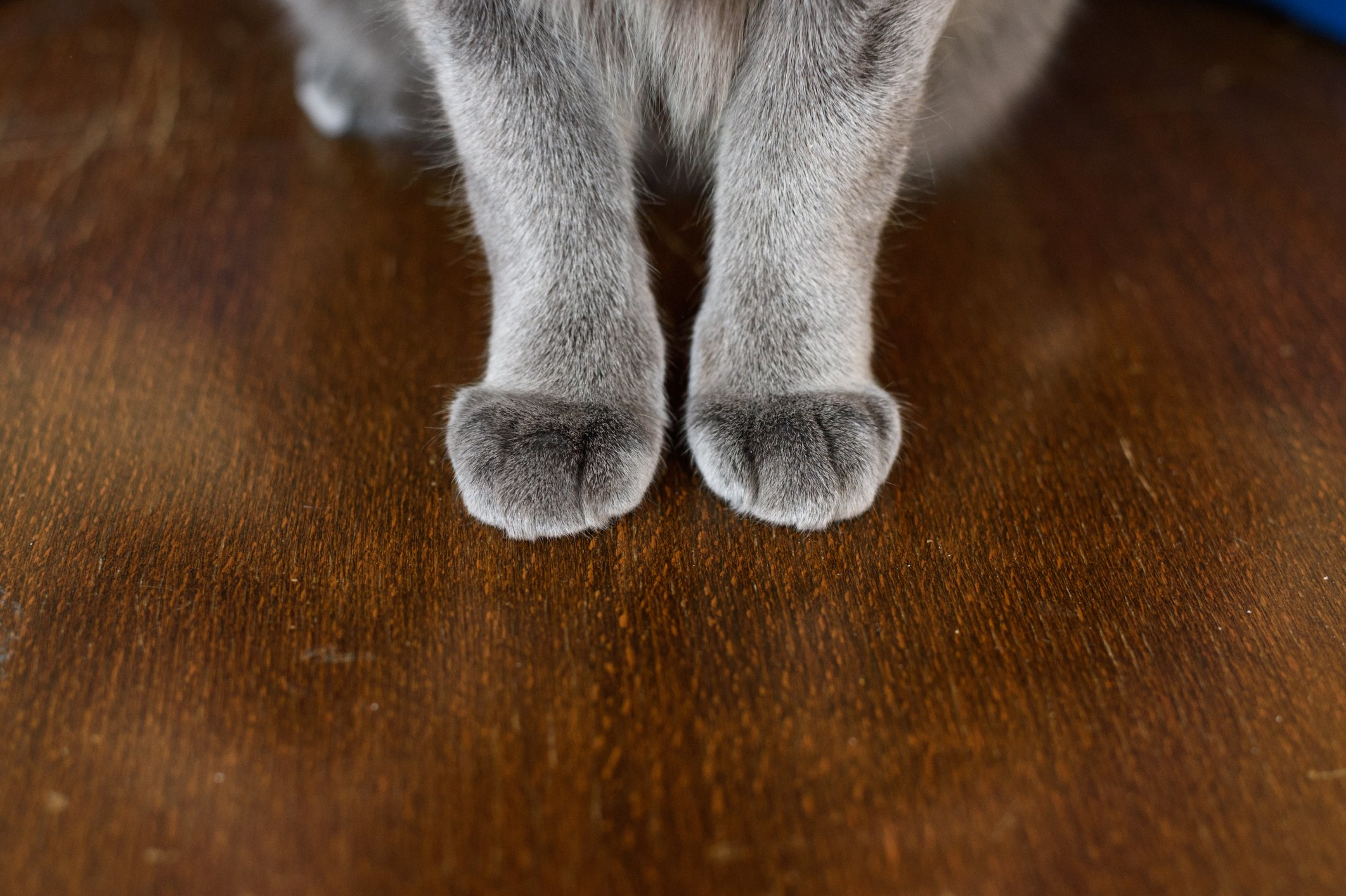 These Changes To Your Cat S Paw Might Indicate A Serious Infection