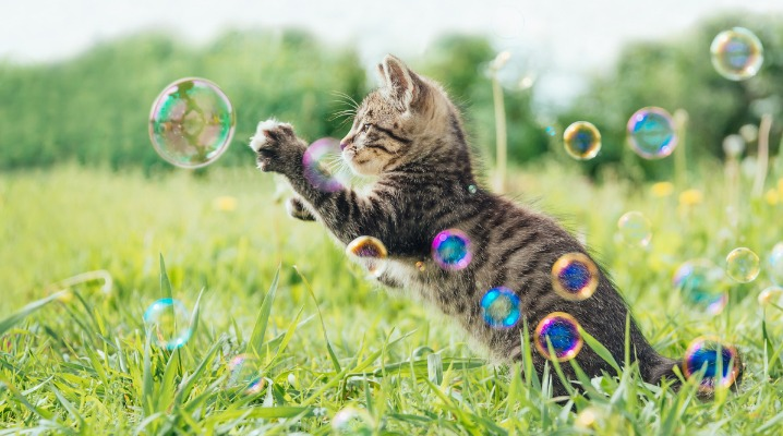 kitten-playing-with-soap-bubbles-picture-id578299588