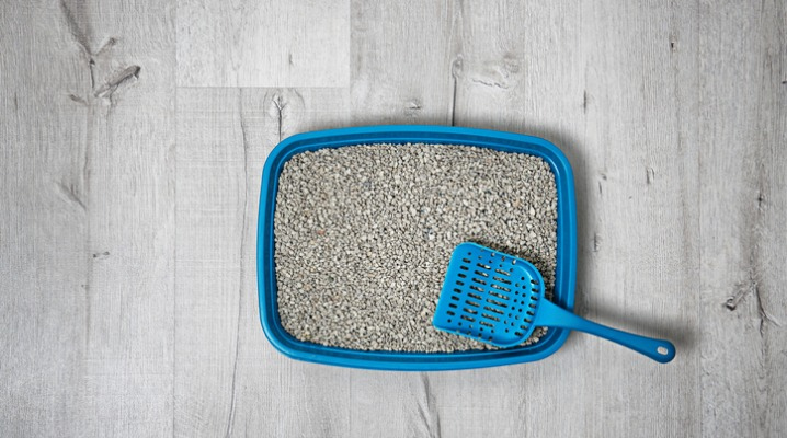 Top view of a cat litter tray and scoop sitting on a hardwood floor