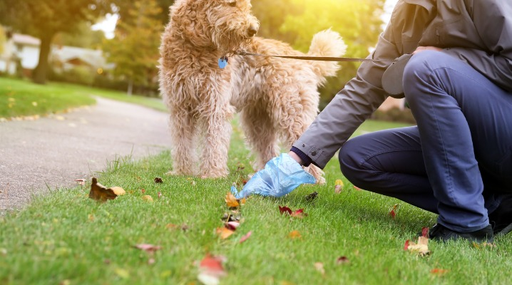 man-picking-up-cleaning-up-dog-droppings-picture-id870673904