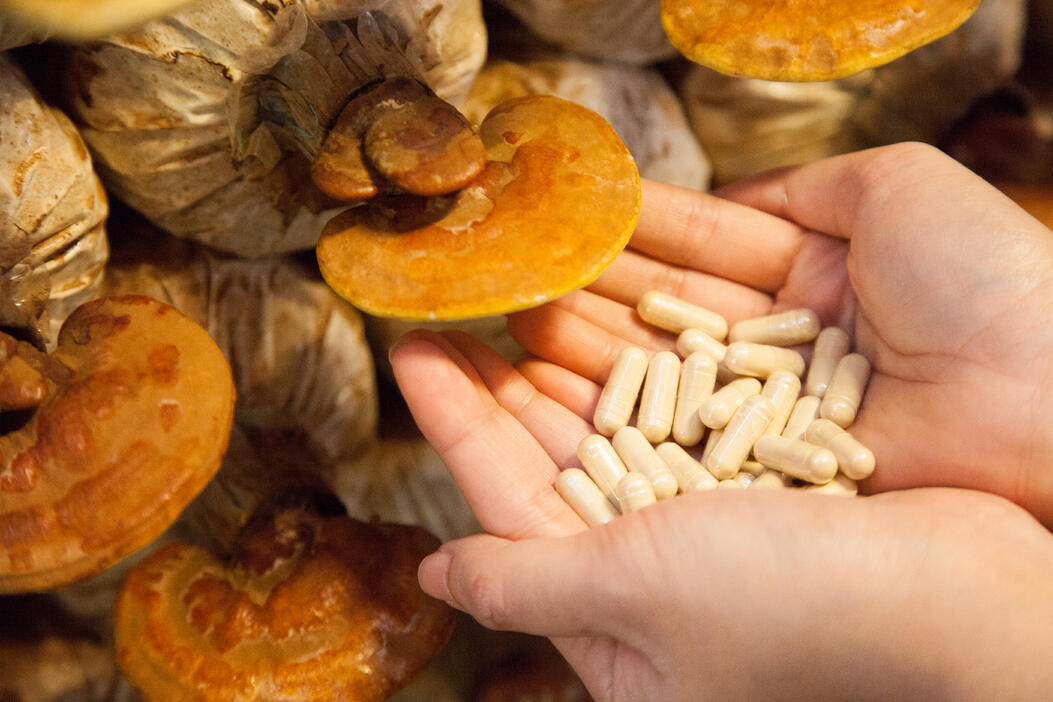 mushrooms-and-supplements
