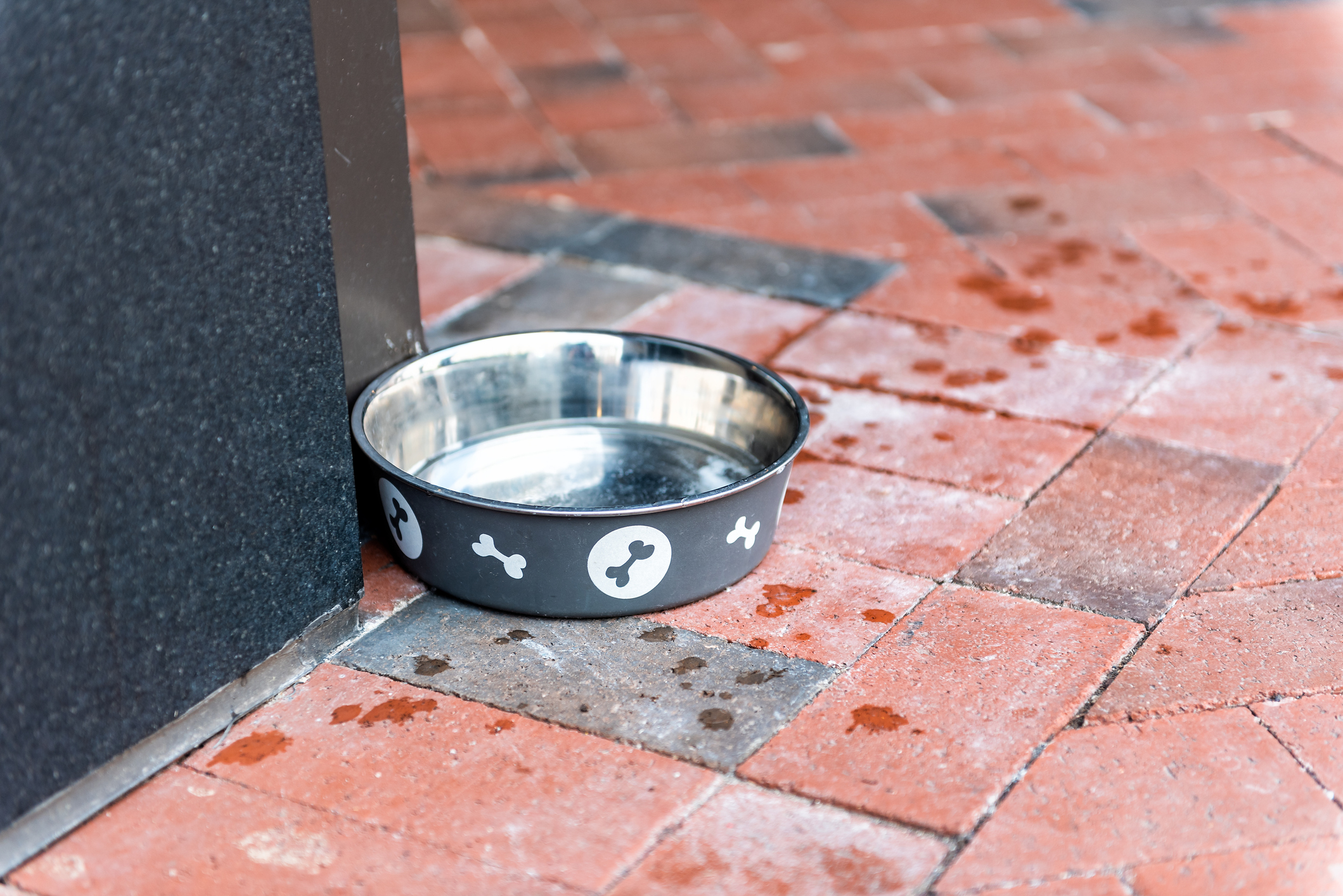 Pet water bowl sits outside on a brick patio