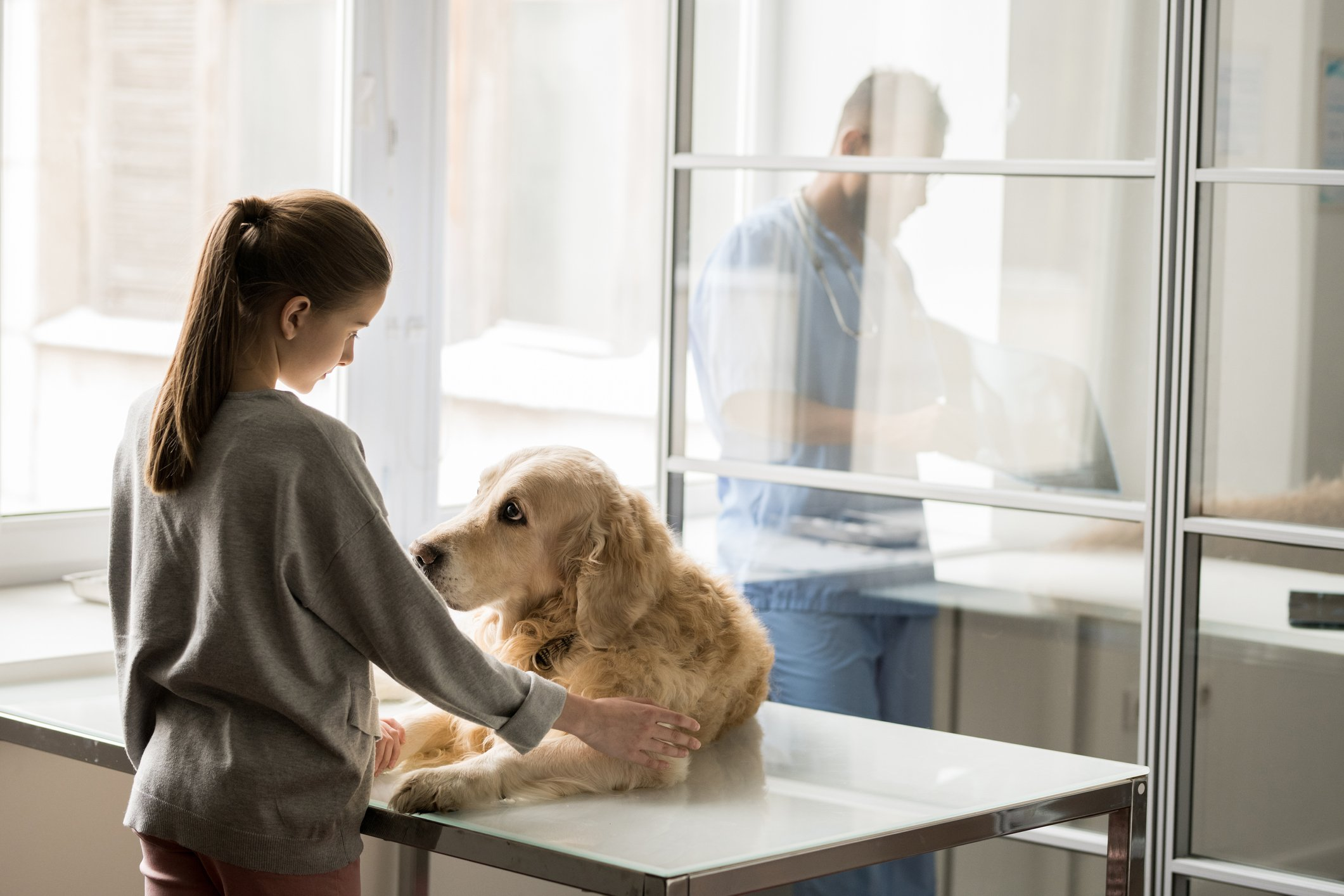 A pet owner comforts her old golden retriever on the vet's examining table