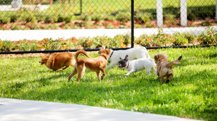 stock-image-of-dogs-in-the-park-picture-id486644823