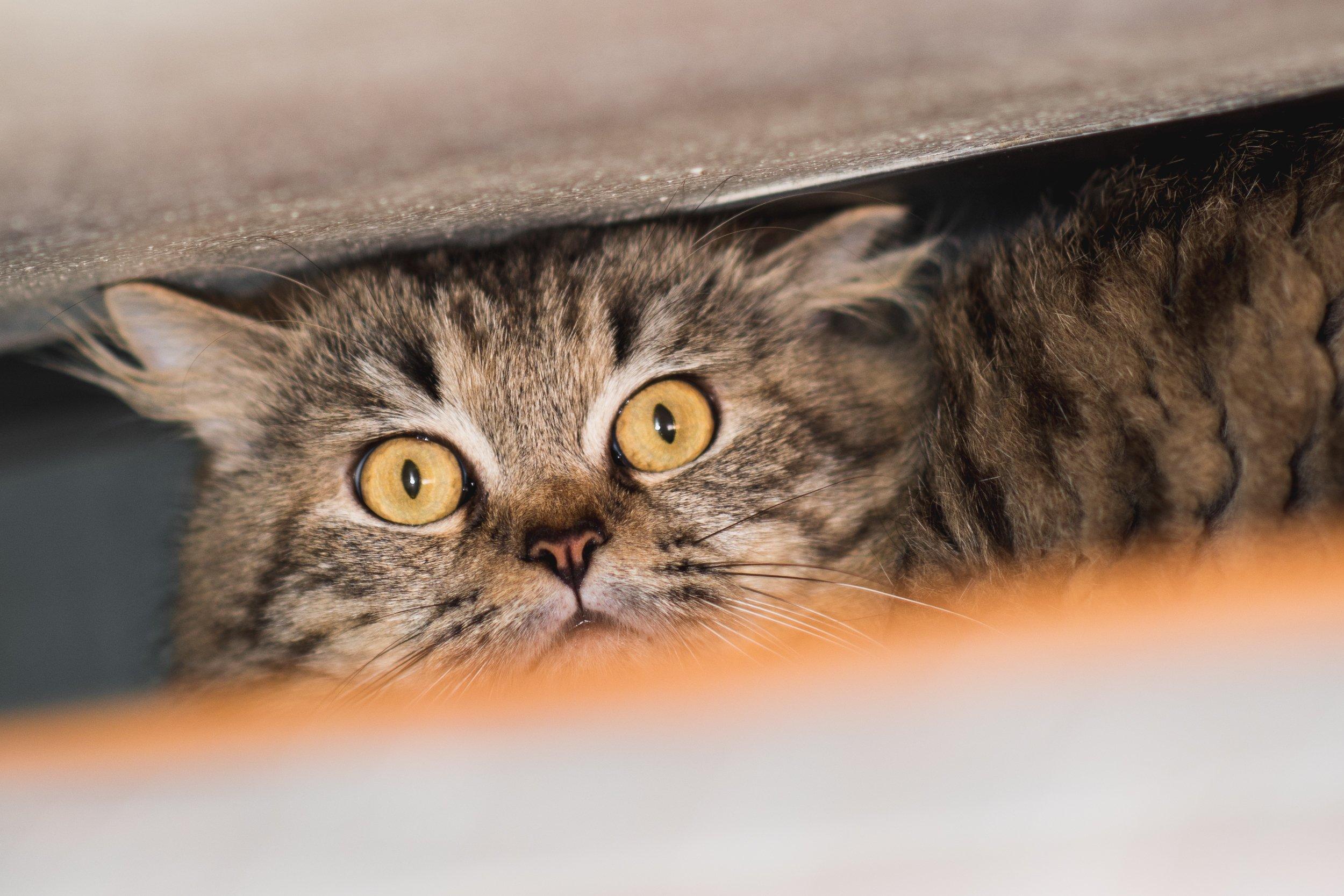 stress-cat