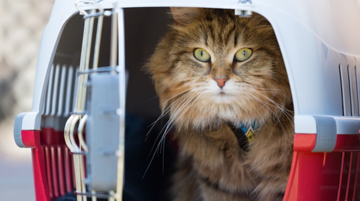 tabby-cat-in-a-red-cage-picture-id957801396