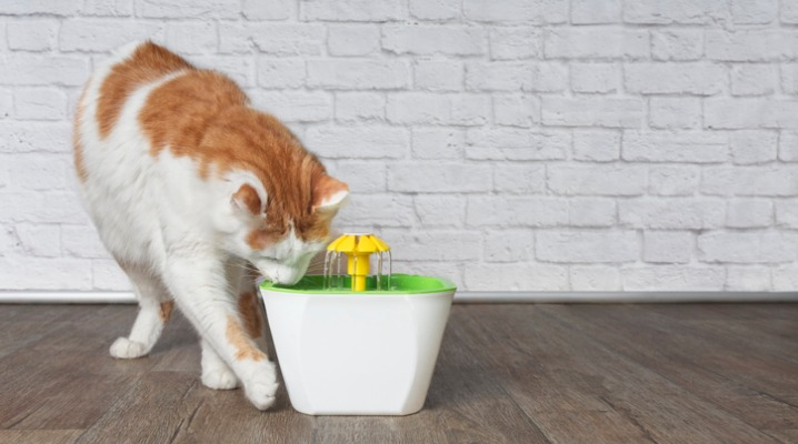 Thirsty orange and white cat drinks from a pet drinking fountain