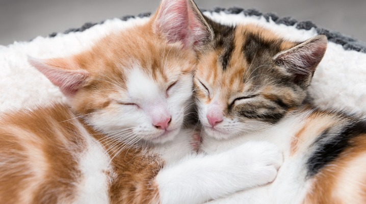 two-cute-kittens-in-a-fluffy-white-bed-picture-id938787108