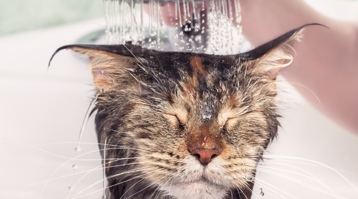 wet-cat-in-bath-picture-id916111836