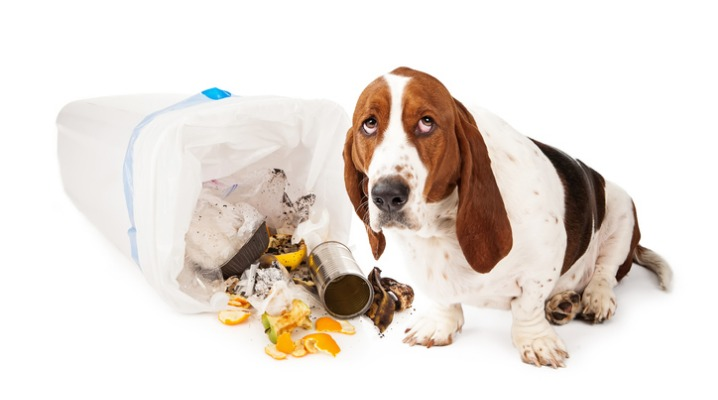 What Did He Eat? Signs Your Dog Has Food Poisoning