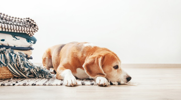 Your Dog's Anemia Can Be a Sign of Any of These More Serious Health Problems