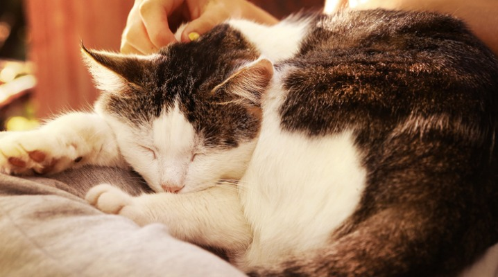 Expect These Changes In Your Aging Cats to Help Keep Them Happy