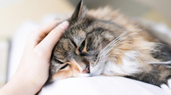What You Should Know About Feline Cancers