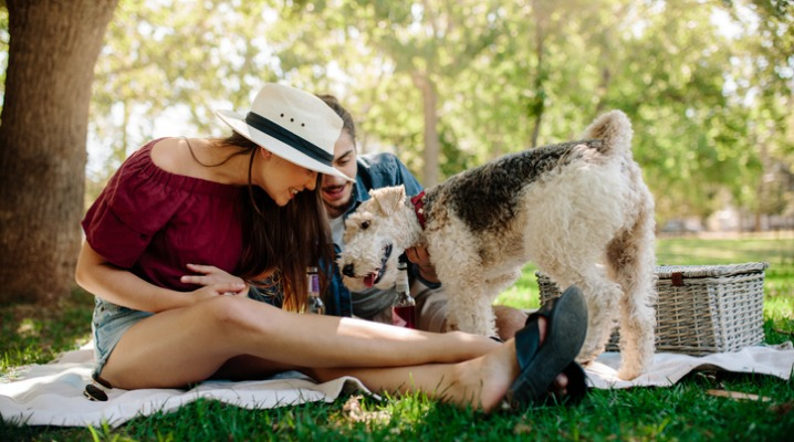 Don't Share Your Picnic: Summer Foods Your Pets Shouldn't Eat