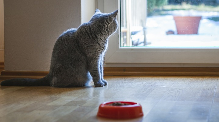 Watch Your Low-Appetite Cat for Signs of Fatty Liver Disease