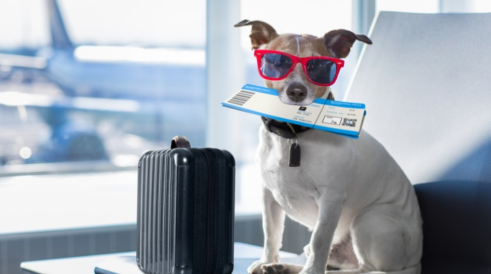 The Ultimate Guide to Flying with Dogs