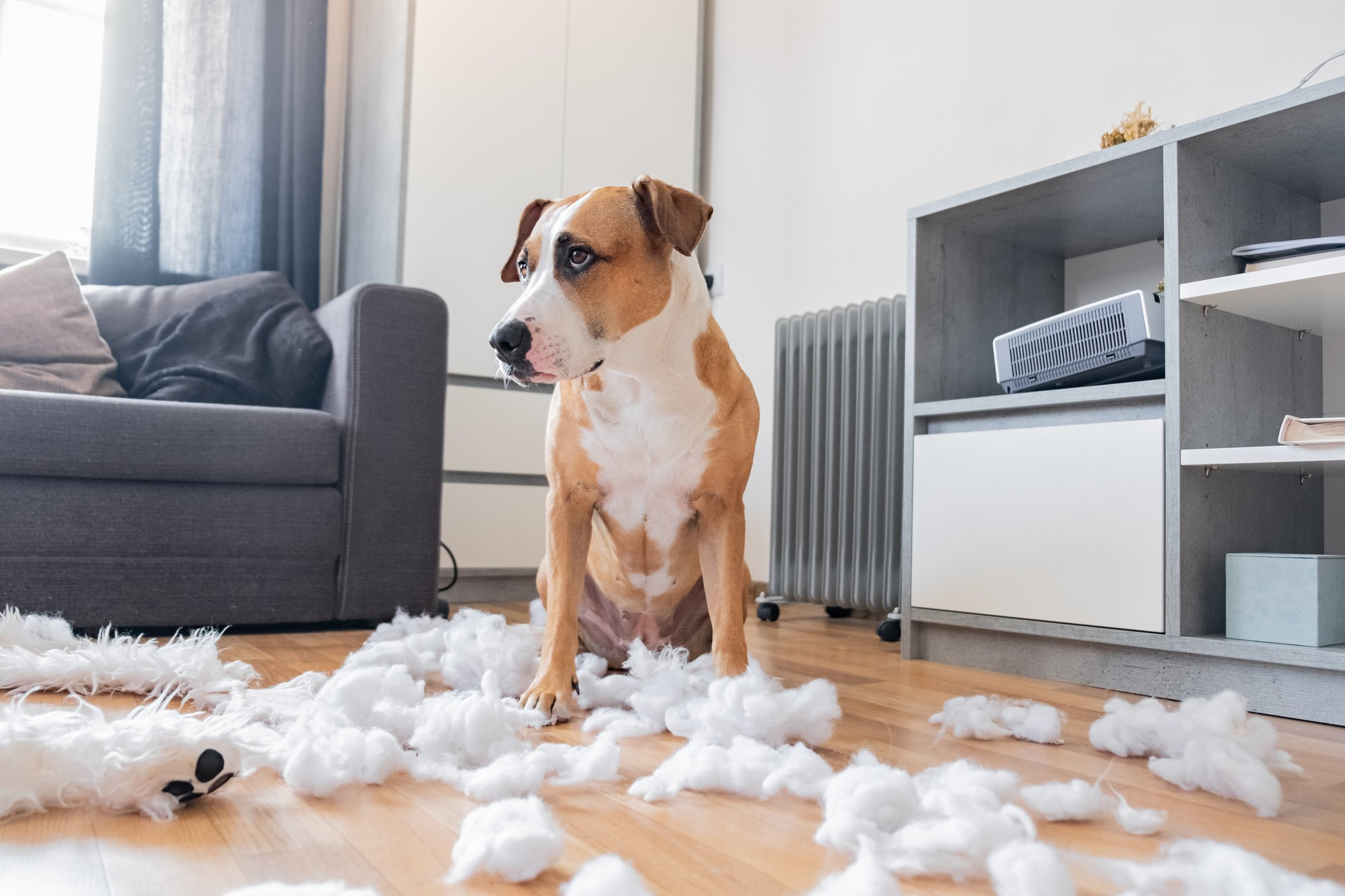 Why Your Dog Insists on Ripping the Stuffing Out of Everything!