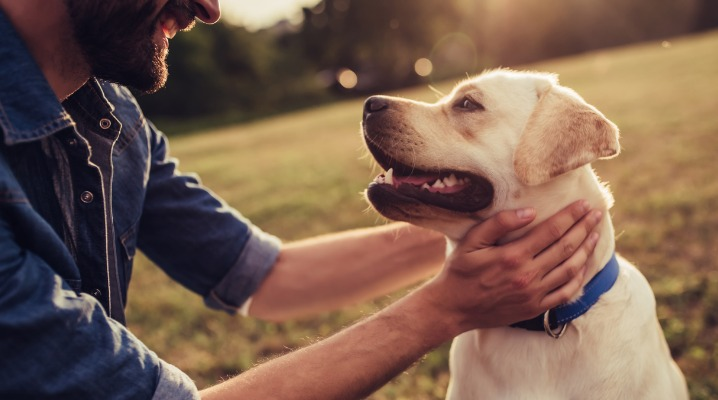 Why It's So Important to Keep Your Pup's Immune System in Good Shape
