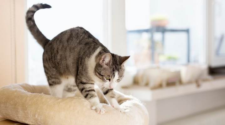 Why Does My Cat Knead?